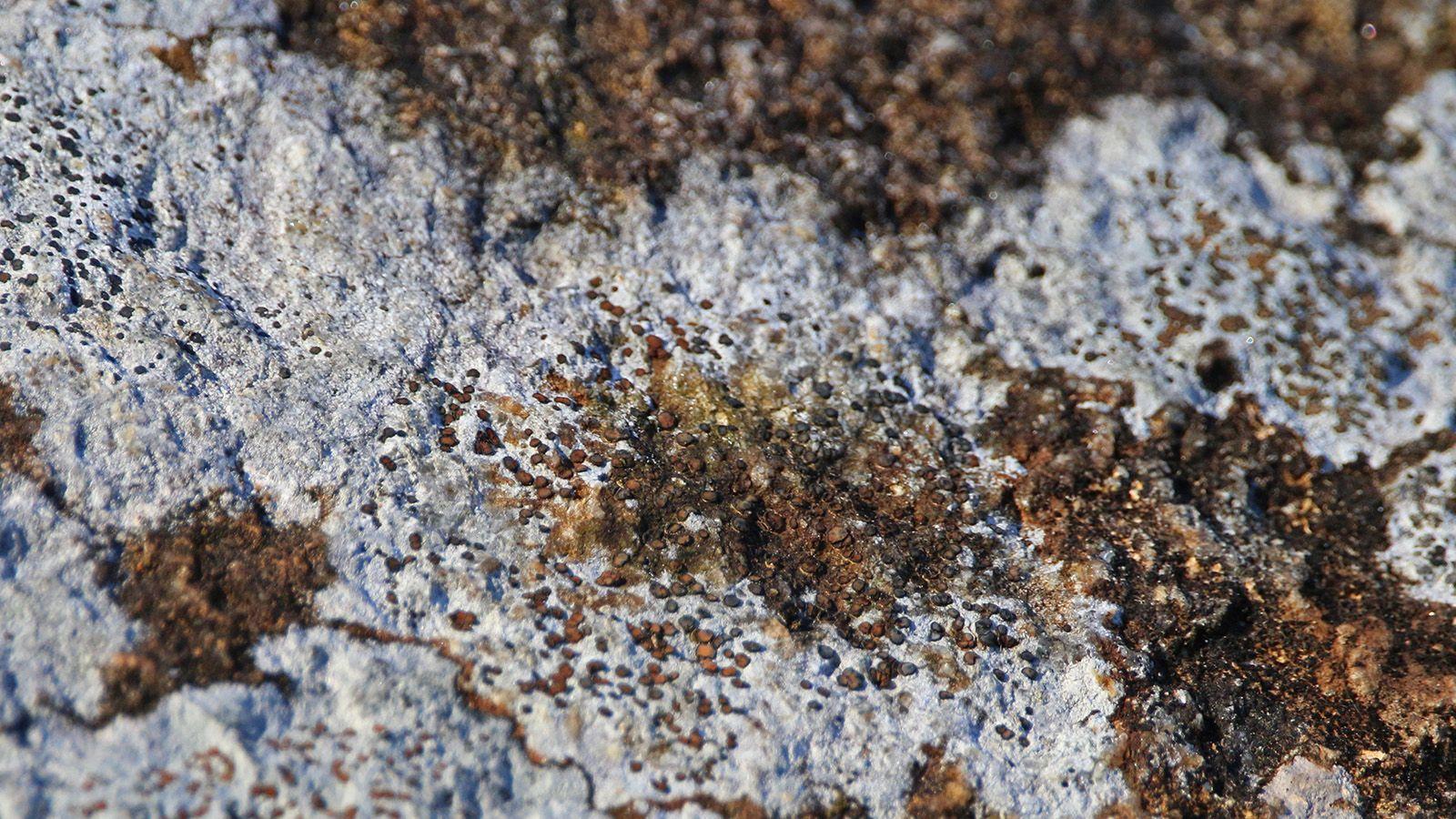 Lichen growing on bark banner image