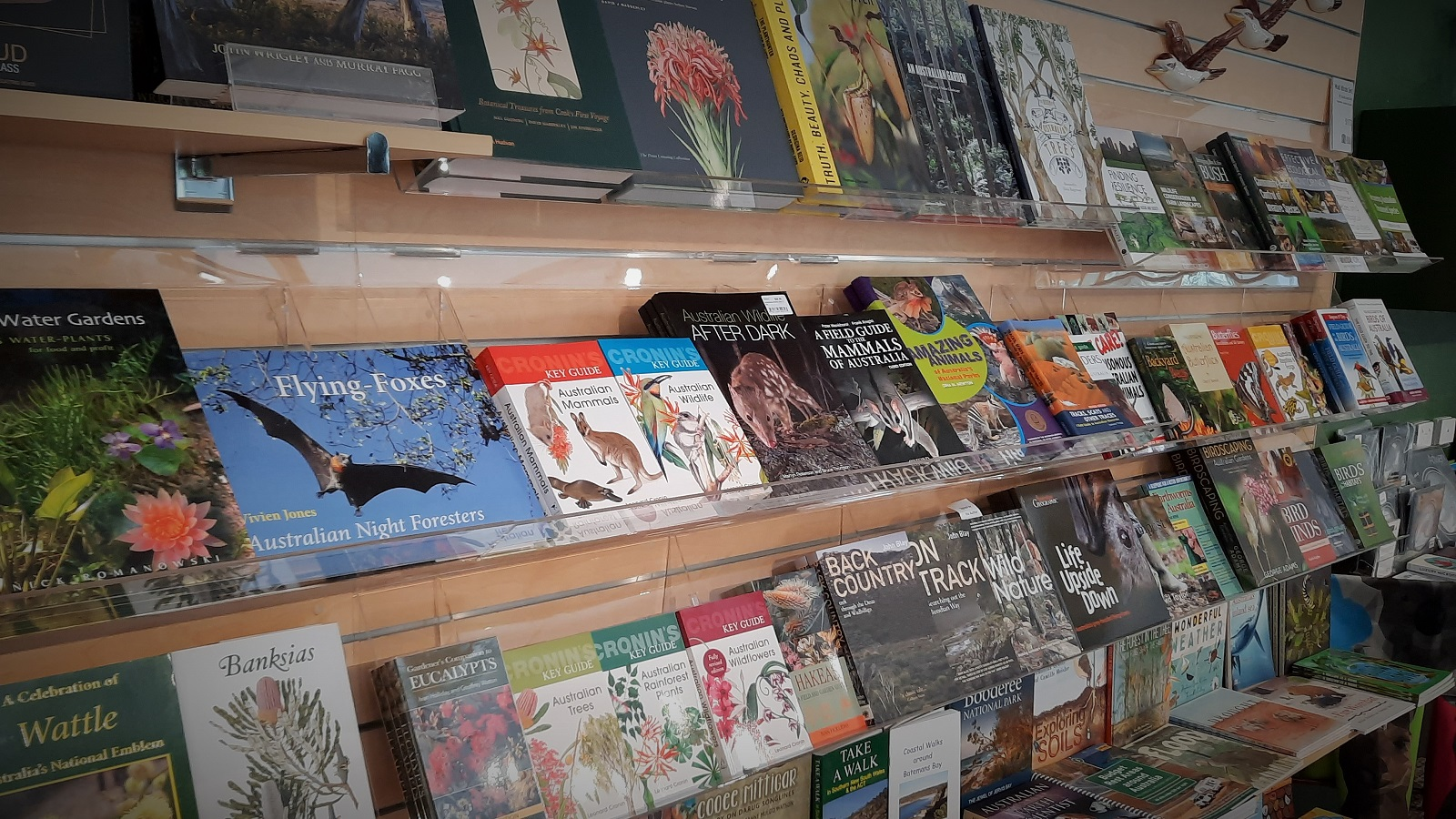 Reference and fiction books on shelves