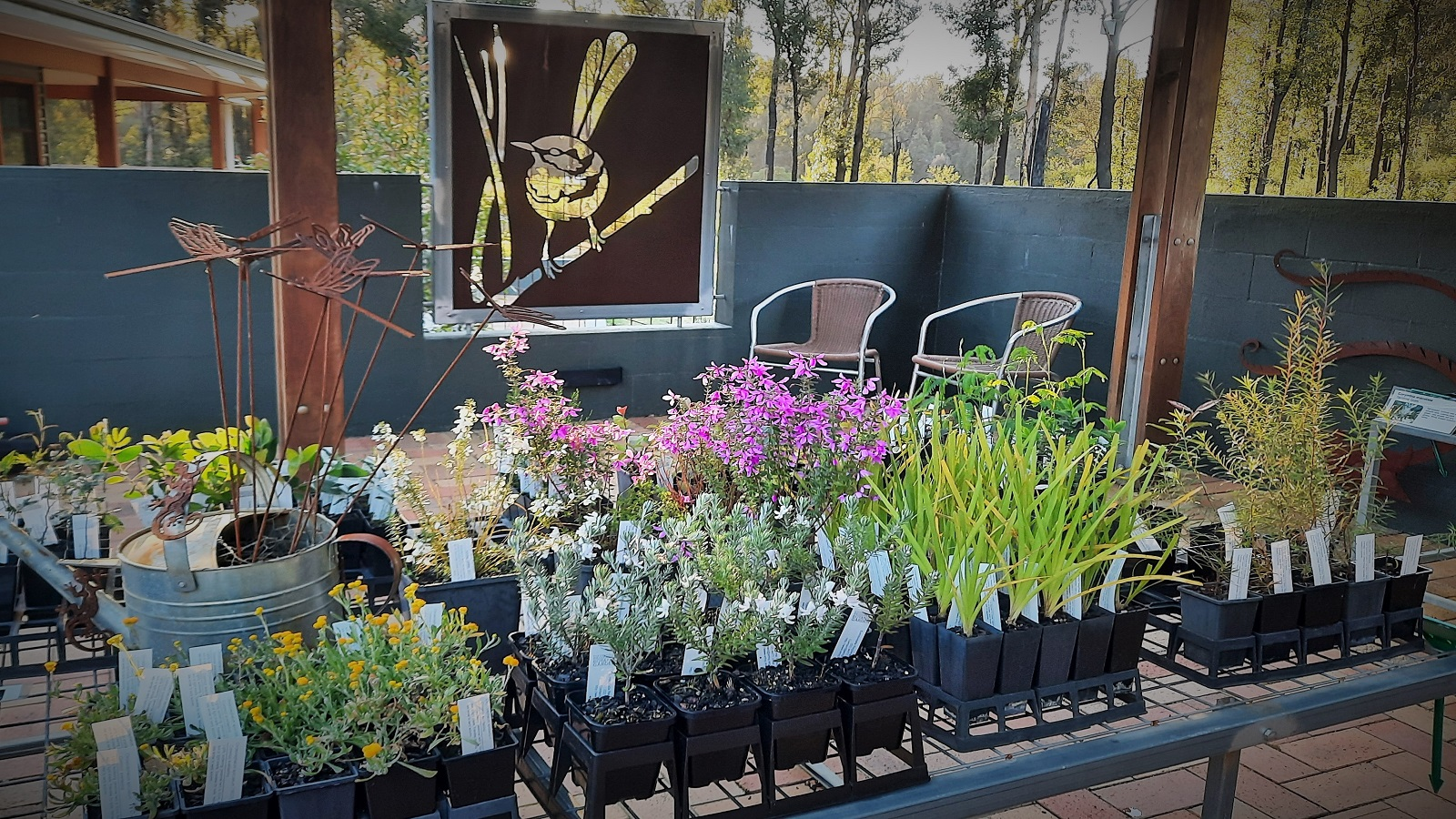 Plants available for purchase from the Botanic Garden shop