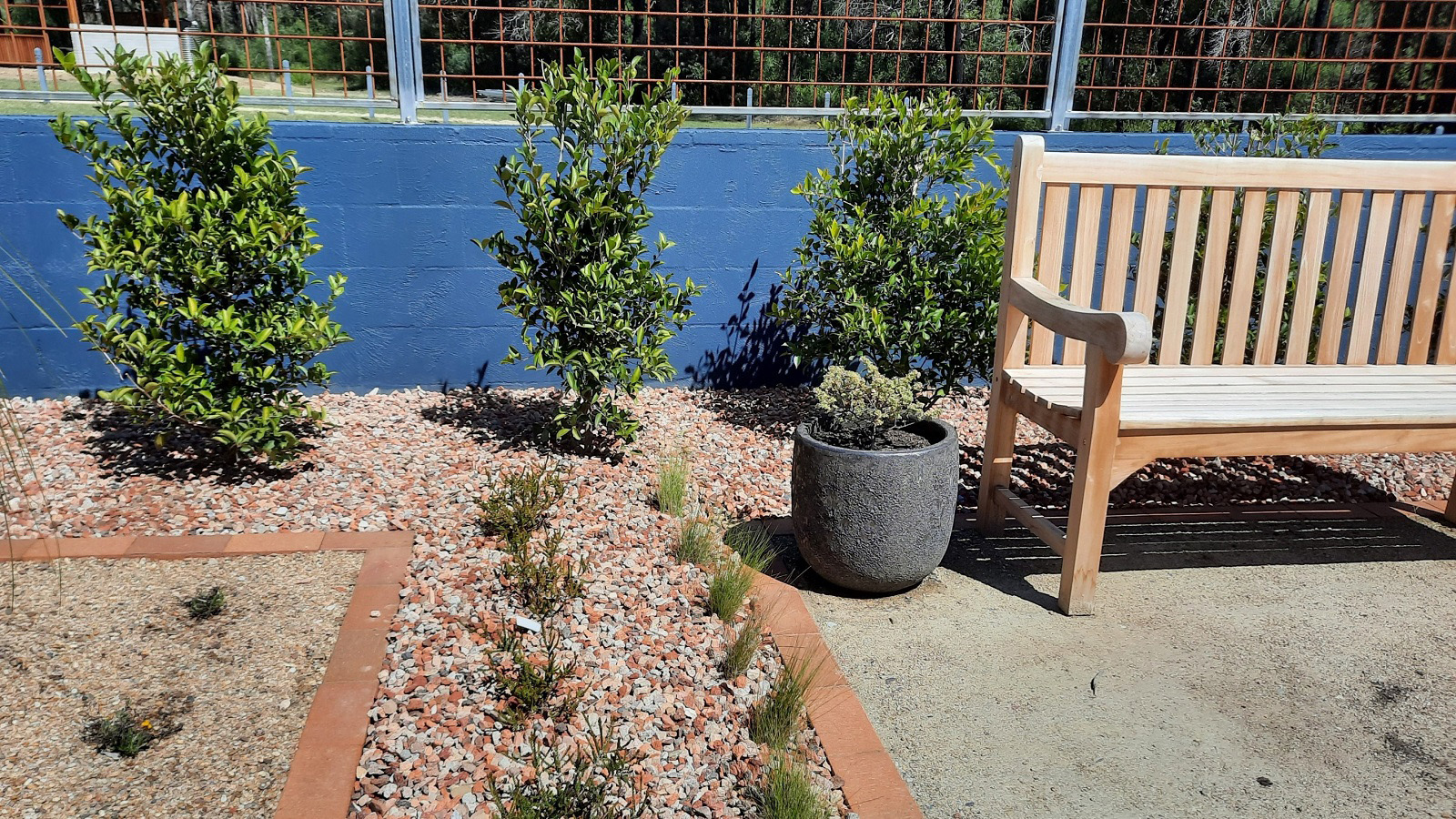 Plants next to an outdoor bench and paved area