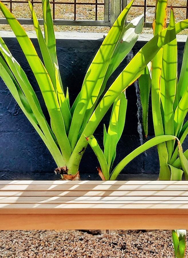 Green foliage plants behind a garden bench