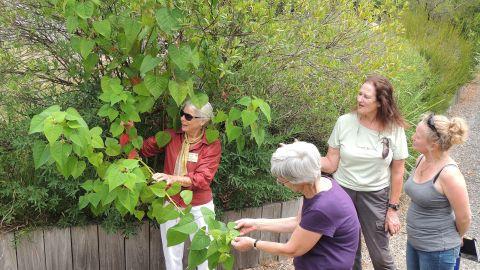 Four women examining a plant's leaves on a Botanic Garden walking path