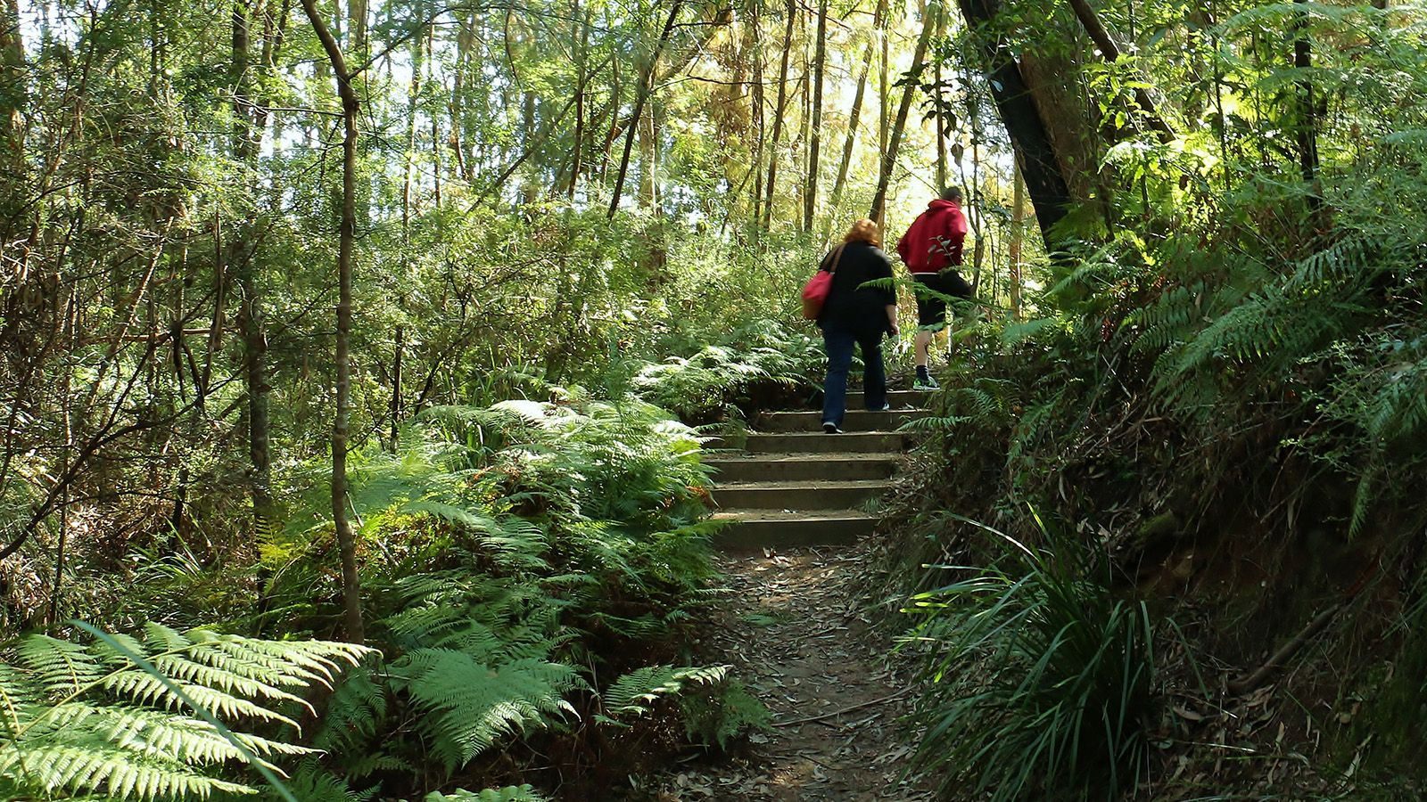 Two people walking up stairs on a bush walking trail banner image